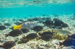 Coral fish Stock Photo