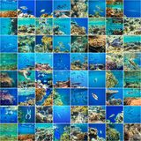 Coral fish Stock Images
