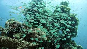 Coral and fish in the Red Sea stock video