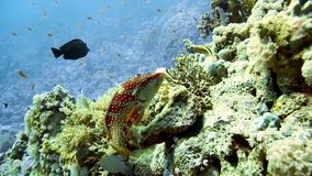 Coral and fish in the Red Sea stock footage