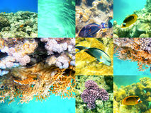 Coral and fish in the Red Sea, Egypt, Africa. Royalty Free Stock Photos