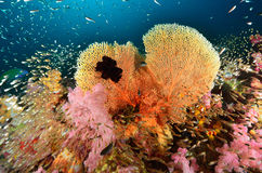 Coral, fish and seafan Royalty Free Stock Photo