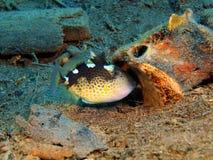 Coral fish. The surprising underwater world of the Bali basin, Island Bali, Puri Jati, coral fish Royalty Free Stock Photos