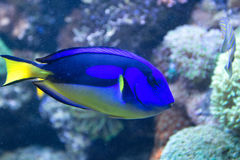Coral fish in the tropical sea Stock Photos