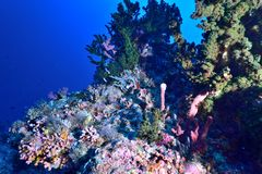 Coral and fishes Royalty Free Stock Photos