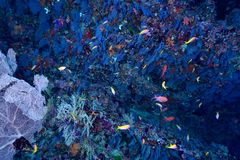 Coral and fishes Royalty Free Stock Photography