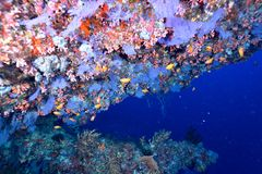 Coral and fishes Royalty Free Stock Photo