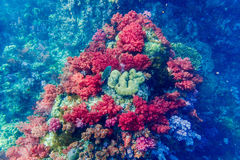 Coral five color Royalty Free Stock Images