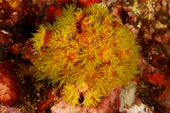 Coral fllower - Andaman Sea Stock Images