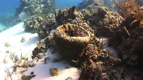 Coral in the form of a bowl stock video footage