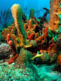Coral Formation Royalty Free Stock Photos