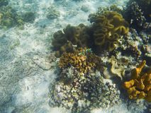 Coral formation on white sand sea bottom. Undersea landscape photo.