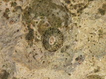 Coral fossil. Old coral fossil at the Red sea coast Stock Image