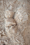 Coral fossil on the beach Royalty Free Stock Photo