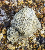 Coral fossil rock Royalty Free Stock Photos