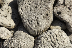 Coral Fossils Stock Photos