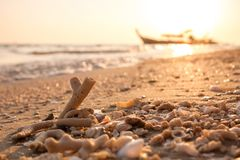 Coral fragments and sea debris on golden beach morning sunlight Stock Image