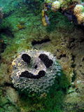 Coral Funny Face Stock Images