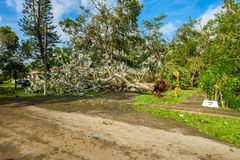 Hurricane Irma Aftermath. Coral Gables, Florida - September 11, 2017: Debris lined streets as a result of Hurricane Irma in this popular neighborhood in Miami stock image