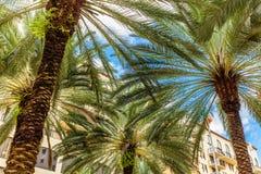 Coral Gables van de binnenstad royalty-vrije stock afbeelding