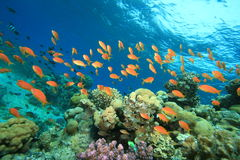 Coral garden Royalty Free Stock Photography