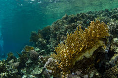 Coral Garden. A beautiful coral garden in the Red Sea stock photos