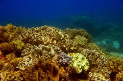 Coral garden Stock Images