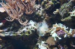 Coral Garden Image stock