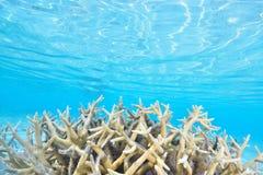 Coral Garden lizenzfreies stockbild