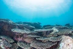 Coral Garden lizenzfreie stockfotografie