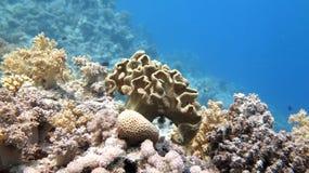 Coral Garden Royaltyfri Fotografi