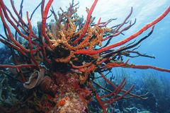Coral garden Stock Photos