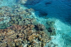 Coral Garden. Aerial view of an underwater coral garden Stock Photo