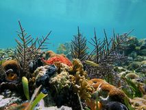 Coral garden in calm sea Royalty Free Stock Photo