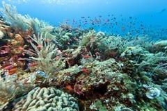 Coral garden Indonesia Stock Photo