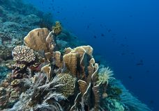 Coral garden Indonesia Royalty Free Stock Photos