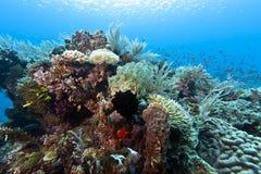 Coral garden Indonesia Stock Photos