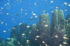 Coral garden with a lot of fishes around, Raja Ampat, West Papua, Indonesia stock images