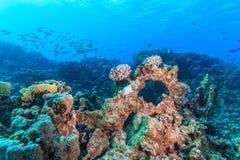 Coral garden Royalty Free Stock Photos