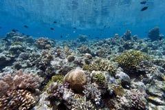 Coral garden off Bunaken island Stock Images