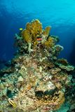 Coral garden in the red sea. In egypt royalty free stock photography