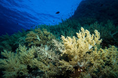 Coral garden in the red sea. In egypt stock photos