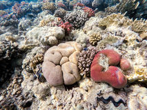 Coral garden in red sea, Marsa Alam, Egypt. Beautiful colorful coral garden in red sea, Marsa Alam, Egypt Stock Photo