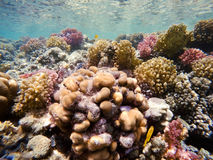 Coral garden in red sea, Marsa Alam, Egypt Stock Images