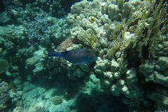 Coral garden with small fishes. Underwater world with coral  and tropical fish Stock Images