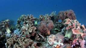 Tropical underwater scene with corals Stock Photos