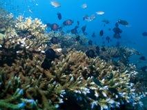 Coral Garden Vista Royalty Free Stock Photo