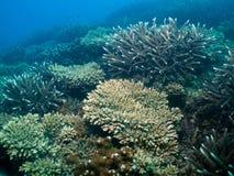 Coral Garden Vista Royalty Free Stock Photos