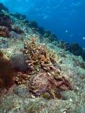 Coral Garden Vista Stock Image