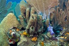 Coral gardens Stock Photos